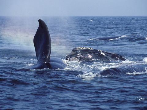 Whale hugs, 'active sea serpents,' and the wild world of whale sex